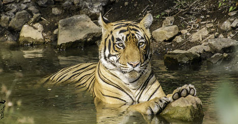 My Experience at Ranthambore National Park- Sundeep Kheria - Latest Travel & Tourism News from Ranthambore National Park | India Travel & Tourism | Scoop.it