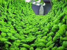 Prefer best hydroponic nutrients for better indoor gardenin | Hydroponics Equipment | Scoop.it