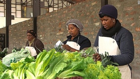 South Africa's urban farming revolution | Eco-Food Innovation | Scoop.it