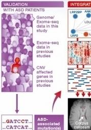 AUTISME: Identification d'un réseau moléculaire sous-jacent ... - santé log | Autisme actu | Scoop.it