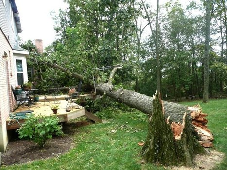 Looks like rain coming our way! | Tree Care Services | Scoop.it