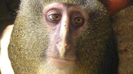 Las diez especies más impactantes del año (Fotos)   la evolución de los organismos   Scoop.it