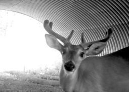 Research project on wildlife crossings on US 93 nearly complete - The Missoulian | animals: the wild and the pet | Scoop.it