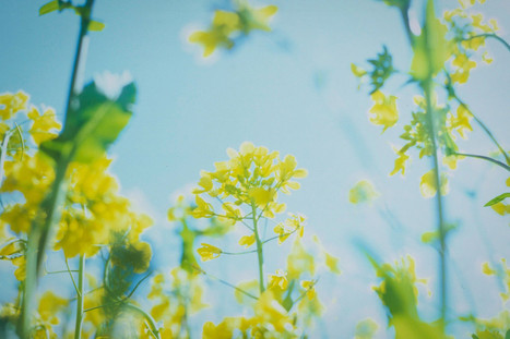Plants may form memories using mad cow disease proteins   Horticulture, parks and gardens   Scoop.it
