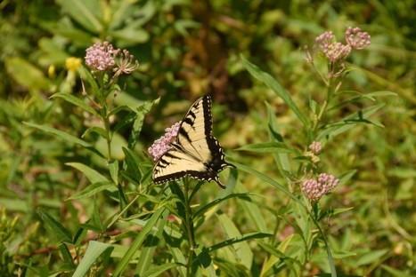 Wildlife Refuge's New Neighbor May Be A Coal Mine - Indiana Public Media | Wildlife | Scoop.it