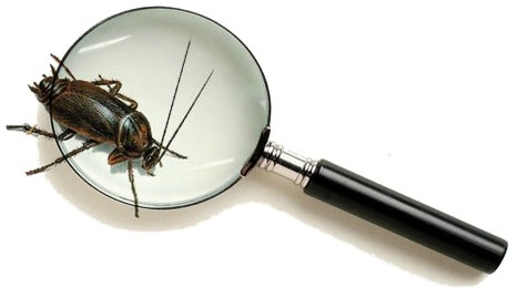 How to Tell If You Need Pest Control – Brownswille, TX, Services and Advic | Esparza Pest Control | Scoop.it