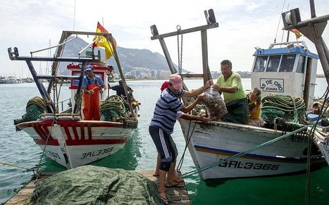Spanish fishing boats could return to Gibraltar waters within months  - Telegraph | Fishing Boat | Scoop.it