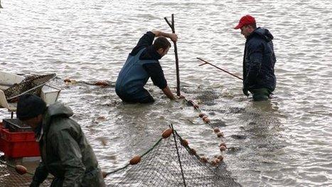 Le Maroc produit 13.000 tonnes de poissons d'eau douce   aquacultures   Scoop.it