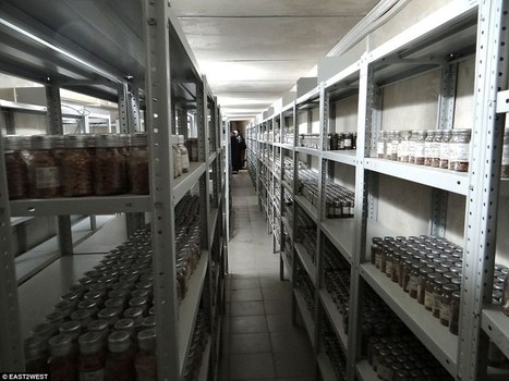 Pics: The Siberian vault protecting millions of seeds against Doomsday | Green IT | Scoop.it