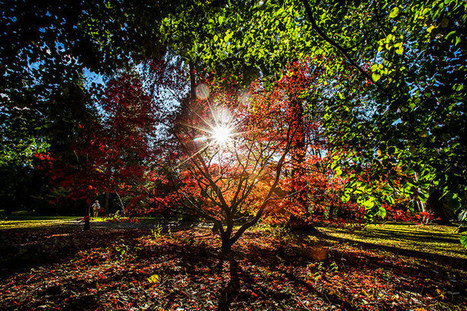 Autumn colours at Westonbirt Arboretum - in pictures | Sustainable Futures | Scoop.it