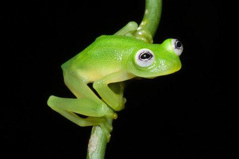 Picture of the Day: Real-Life Kermit the Frog Discovered | xposing world of Photography & Design | Scoop.it
