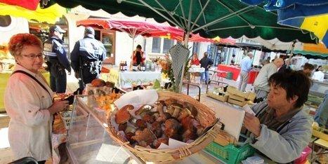 Cèpes en Dordogne : un petit tour et puis s'en va | Agriculture en Dordogne | Scoop.it