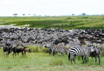 10 Best Safari Destinations in Africa | Travel & tourism | Scoop.it