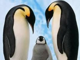 ANTARCTIC PENGUINS AS A CLIMATE CHANGE INDICATOR: Pushing Antarctic Penguins Toward Extinction