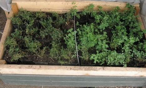 Starting Seeds & Making Potting Mix | Organic Farming | Scoop.it