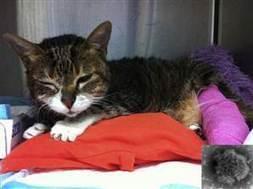 New virus linked to deadly kidney disease in cats   Virology News   Scoop.it