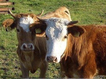 Is your state criminalizing farm cruelty whistleblowers? : TreeHugger | Animals R Us | Scoop.it
