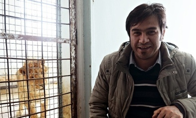 Murdered Afghan journalist Sardar Ahmad's last story: Kabul's rescued lion | Nature Animals humankind | Scoop.it