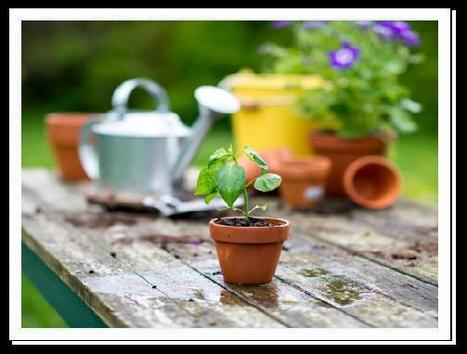 How beneficial are garden pots and planters for gardeners? | Traffic Safety India | Scoop.it