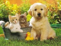 Dog nursing two kittens left outside animal shelter | cats & dogs! | Scoop.it