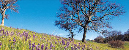County of Sonoma OSD Conservation GIS Analyst Job | Conservation GIS | Scoop.it