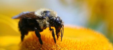 How Seed and Pesticide Companies Push Farmers to Use Bee-Killing Insecticides | Questions de développement ... | Scoop.it