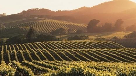Le champagne picard fait des buzz! « etourisme.info | Le Monde du Vin | Scoop.it