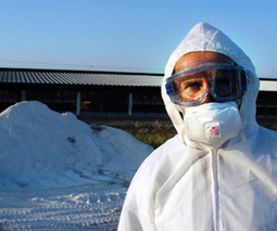 US bird flu research to resume under new restrictions   Evolutionary and Synthetic Biology: Design devices for addressed antiviral inhibition   Scoop.it
