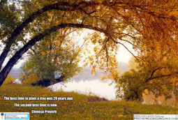The best time to plant a tree was 20 years ago. The second best time is now. -- Chinese Proverb   Psychic Readings Source   Scoop.it
