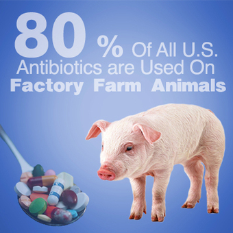 FDA Fails to Reduce Antibiotic Use on Factory Farms - Ring Of Fire Radio: Robert Kennedy Jr, Mike Papantonio and Sam Seder | Farming, Forests, Water & Fishing (No Petroleum Added) | Scoop.it