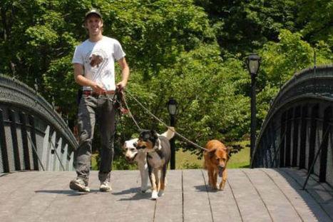 Assicurazione per cani: a cosa serve e quale scegliere | My Pet's Hero | Scoop.it