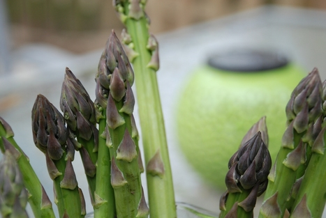Asparagus Time! - Rare Republic | Unit 6 (Agriculture) | Scoop.it