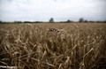 Food may cause almost a third of greenhouse emissions - study | Sustain Our Earth | Scoop.it