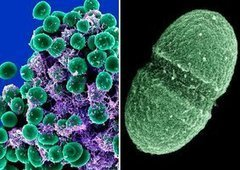 Time to learn about your microbiome | Bio Sciences | Scoop.it