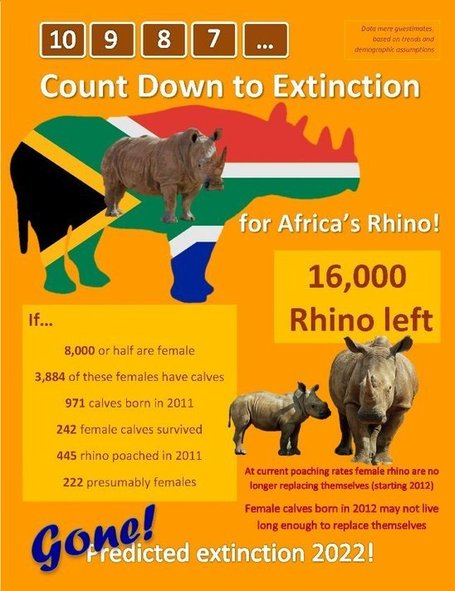 How Long Till South Africa's Rhino Are Extinct? | Nikela: Funding Wildlife Conservation & Education to Save Wildlife in Africa | What's Happening to Africa's Rhino? | Scoop.it