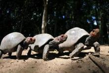 Scientists lift lid on turtle evolution | Complex Insight  - Understanding our world | Scoop.it