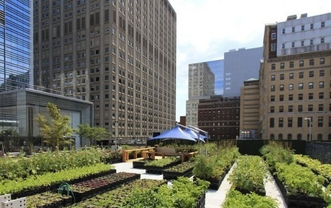 The Impact of Urban Farming in New York | PROYECTO ESPACIOS | Scoop.it