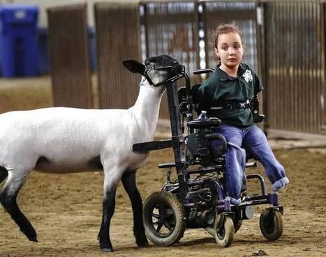 Oklahoma girl adapts wheelchair to sheep show ring - NewsOK.com | Wheelchairs | Scoop.it