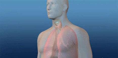 Chip que respira pode ser a solução contra testes em animais | Meu Acre, Ciências, Brasil, Artes e Borboletas | Scoop.it