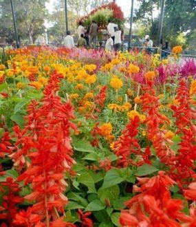 Sikkim set to flaunt flower power to world - Times of India | Floriculture in India | Scoop.it