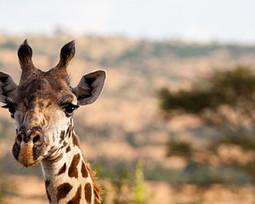 Discovery Centre to Open at Four Seasons Safari Lodge Serengeti,Tanzania. - Travelandtourworld.com | Serengeti Safari | Scoop.it