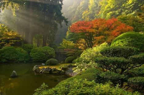 Japanese Garden | Harmony Nature | Scoop.it