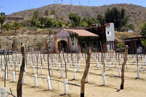 Dunne on Wine: California winemaking star looks to make it big in Mexico   Baja California   Scoop.it
