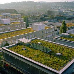 Torino scommette sui tetti verdi | BIOEDILIZIA | Scoop.it