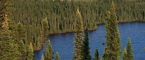 3. Journal Article - New Study: As Climate Changes, Boreal Forests to Shift North and Relinquish More Carbon Than Expected | Boreal (Taiga Forest) | Scoop.it