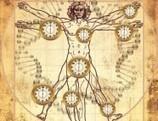 Descubierto el reloj biológico que mide la edad de nuestros órganos   4º de ESO. Bloque 3: La evolución de la vida   Scoop.it
