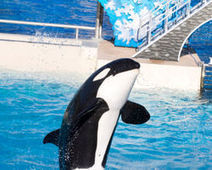 SeaWorld: Stop giving drugs to orcas - The Petition Site | Animals in Captivity | Scoop.it