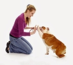 Dog Health Care: Offer Unconditional Love and Health Care to Dogs   Dog Health Care   Scoop.it