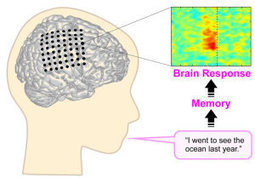 Finding thoughts in speech: How human brain processes thoughts during natural communication   Social Neuroscience Advances   Scoop.it