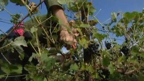 Trélou-sur-Marne (02) : premiers coups de sécateurs dans les vignes - France 3 Picardie   social media subjects   Scoop.it